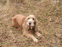 Hond op een hooi Stock Afbeelding