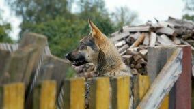 Hond op een ketting rond de cabine achter de omheining stock video