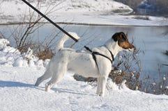 Hond op een leiband dichtbij een rivier royalty-vrije stock fotografie