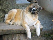 Hond op een lijst 1 Stock Fotografie