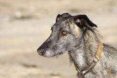 Hond op een strand stock afbeeldingen