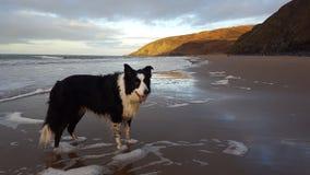 Hond op een strand Stock Fotografie