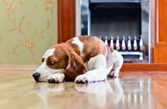 Hond op een vloer royalty-vrije stock foto's