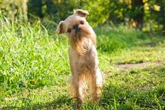 Hond op gang in de zomer Stock Foto