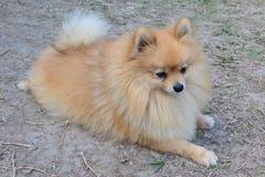 Hond op grond Stock Afbeeldingen