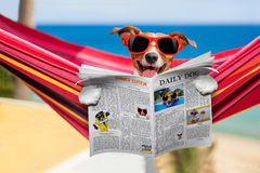 Hond op hangmat in de zomer Royalty-vrije Stock Afbeeldingen