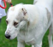 Hond op het gras stock afbeeldingen