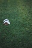Hond op het gras Stock Afbeelding
