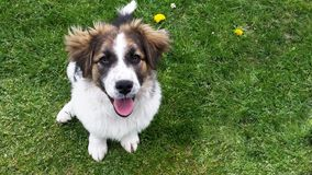 Hond op het gras Royalty-vrije Stock Foto