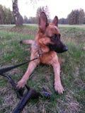 Hond op het gras royalty-vrije stock afbeeldingen