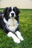 Hond op het gras met ernstige blik wordt gelegd die royalty-vrije stock afbeeldingen