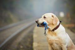 Hond op het spoorwegplatform Stock Foto's