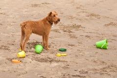Hond op het Strand Stock Afbeeldingen