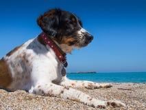 Hond op het Strand Stock Foto's