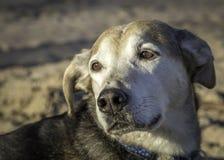 Hond op het strand Royalty-vrije Stock Afbeeldingen