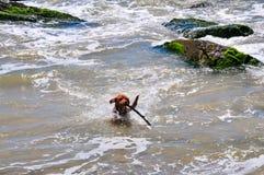 Hond op het water stock afbeeldingen