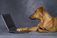 Hond op het werk Stock Afbeeldingen