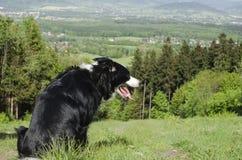 Hond op heuvel Stock Foto