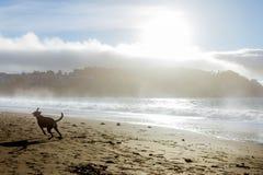 Hond op los royalty-vrije stock afbeeldingen