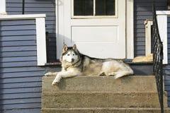 Hond op portiek stock foto's