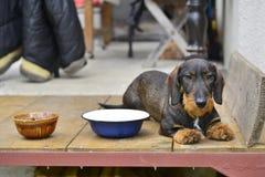 Hond op portiek royalty-vrije stock foto's