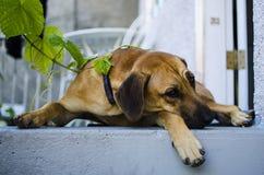 Hond op portiek royalty-vrije stock fotografie