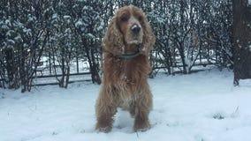 Hond op sneeuw stock foto's