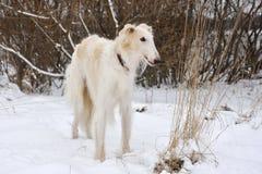 Hond op sneeuw Royalty-vrije Stock Afbeelding