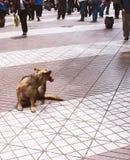 Hond op stoep Royalty-vrije Stock Foto