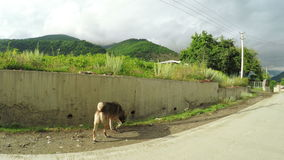 Hond op straat stock footage