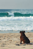 Hond op Strand royalty-vrije stock fotografie