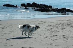 Hond op strand III Royalty-vrije Stock Afbeeldingen