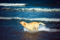 Hond op strand-Mitko Stock Foto's