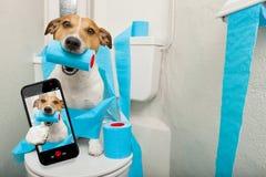 Hond op toiletzetel royalty-vrije stock foto