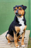 Hond op tuinlijst Royalty-vrije Stock Afbeeldingen