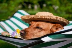 Hond op vakantie Stock Afbeelding
