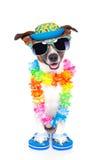Hond op vakantie stock foto