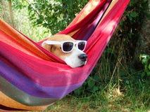 Hond op vakantie Stock Foto's