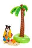 Hond op vakantie bij tropisch strand royalty-vrije stock afbeelding