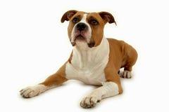 Hond op wit royalty-vrije stock afbeelding