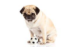 Hond op witte achtergrond, voetbal wordt geïsoleerd dat Voetbal Royalty-vrije Stock Fotografie