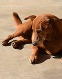 Hond op zonlicht Royalty-vrije Stock Foto
