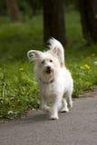 Hond in openlucht stock foto