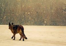 Hond in openlucht in de winter Stock Foto's