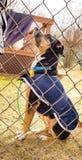 Hond opleiding Royalty-vrije Stock Afbeeldingen