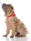 Hond opleiding Royalty-vrije Stock Fotografie