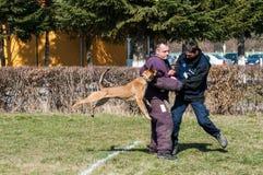 Hond opleiding Stock Foto
