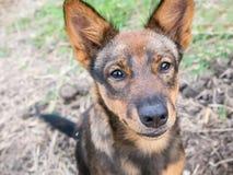 Hond opleiding in het park Stock Afbeelding