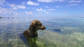 Hond in overzees of het water van Indische Oceaan stock videobeelden