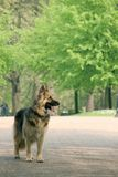 Hond in park Stock Afbeelding